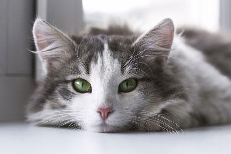 Katze guckt entspannt