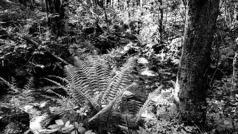Borneo oder Piemont?