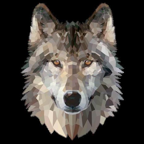 Bild eines Wolfes. Grafisch dargestellt im polygon Stil
