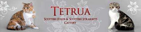 Тетруа