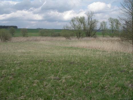 Blick über die LBV-eigenen Feuchtwiesenkomplexe der Bad Rodacher Bischofsau