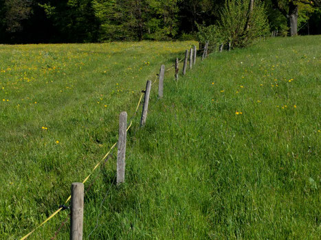 Links: blühende Wiese, rechts: grüne Einöde.
