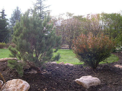 sylva-jardins-paysages.fr-rénovation de jardin de ville