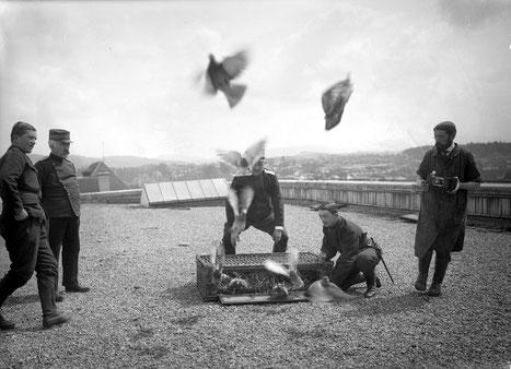 Start von Militär-Brieftauben im Ersten Weltkrieg