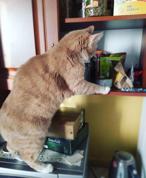 Рекс, колбаски нет, чай скидывать?