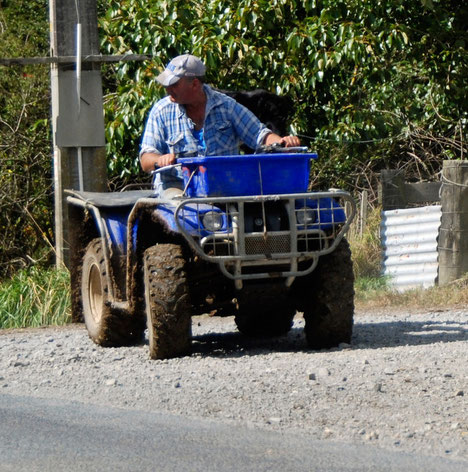 Happy farmer and quad bike after the 3pm milking session on the Pakiri Beach road, Auckland.