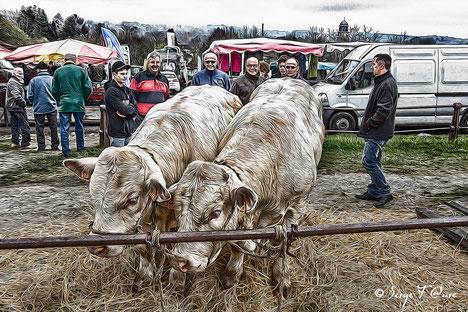 Vidéo - diaporama de la foire de Giat - Auvergne - France