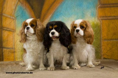 v.l.n.r.: Perlas Nobles Amber Rose, Zoe vom Kaninchengarten und Perlas Nobles Bridget Jones