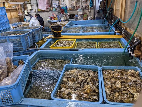苅田港牡蠣