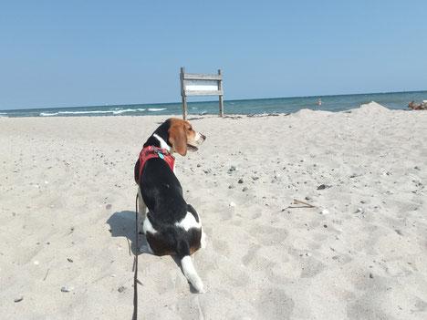 Lilly am Weidefelder Hundestrand