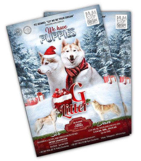 luxury design template dog mate; luxury design male female dog mate order; malanute; reklama sobaka vyazka disain zakazat; price; cost; beautiful advertising dog design;