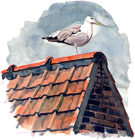 Möwe; Belgien; Aquarell; Tobias Willa; Illustration; Dach; Pinsel; Papier; Ziegel; Malerei; Zeichnung; Vogel