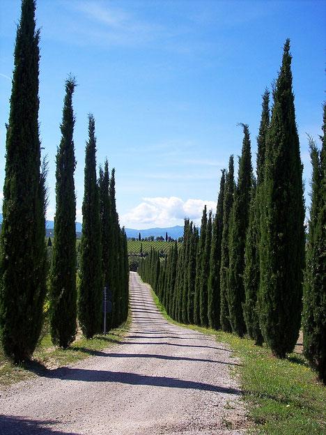 Bibbona, Toscana, Italia. Itinerari di vino. Blog Etesiaca