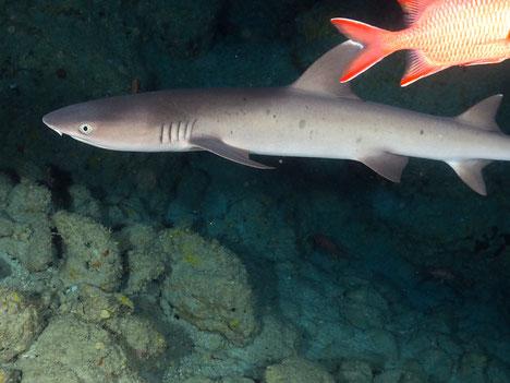 海中写真その③。サメです!