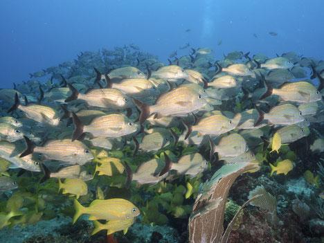 海中写真その④。魚の群れと一緒に。