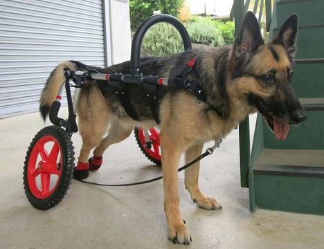 大型犬車椅子 犬の車いす 犬用車椅子 犬 車イス 犬 歩行器 dogkart 車椅子犬 クララワークス