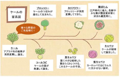 ブロッコリーの栄養、ブロッコリーのビタミン、ブロッコリー抗酸化作用