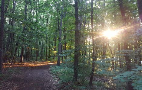 Unterwegs in der Natur Wanderungen fördern Kreativität