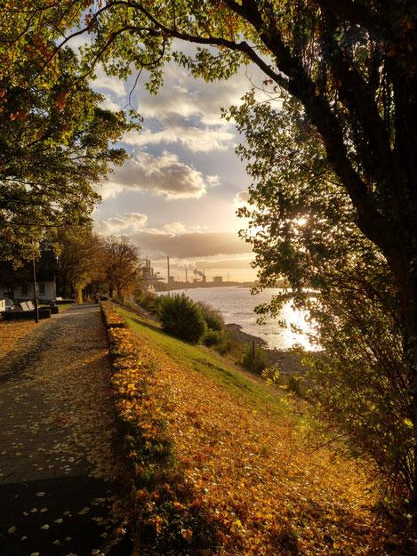Rheinpromenade im Herbst 2018, Foto: Doris Kaufmann