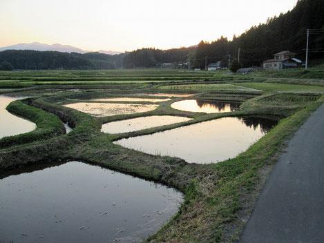 小区画水田に夕陽が映り、とても美しい景色です