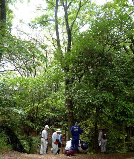 新緑の森-これを守る新テストを始める関係者たち