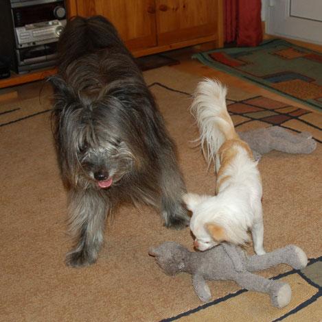 10.5.2010 Lady und Joy beim Spielen