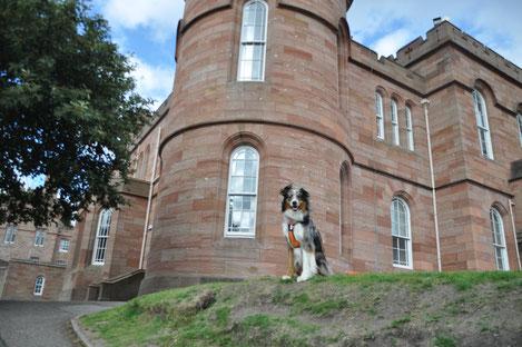 voyager avec son chien en Ecosse au chateau D'Inverness