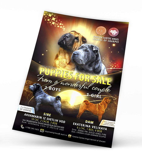 Familia Santos Angels; Familia Santos Angels sharpei kennel; USA; Ukraine; sharpei kennel; FCI; UKU; Ukrainian Kennel Union; puppies; sale; poster; best;  advertising; luxury; exclusive; creative; beautiful; design; template;
