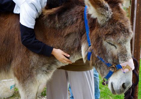 Médiation animale, asinothérapie, zoothérapie aux ânes de Balaam