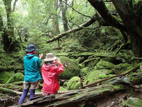 8月7日、8日縄文杉1泊ツアーは、女性限定!一人旅歓迎!