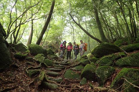 7月18日、19日縄文杉1泊ツアーは、女性限定!一人旅歓迎!