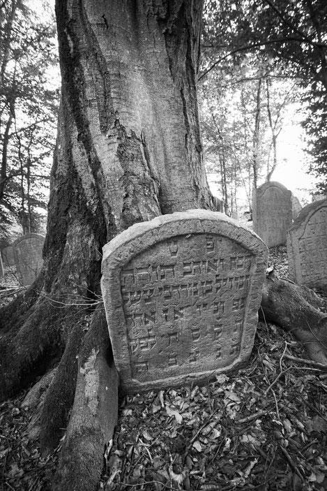 Erst war der Stein, dann wuchs der Baum