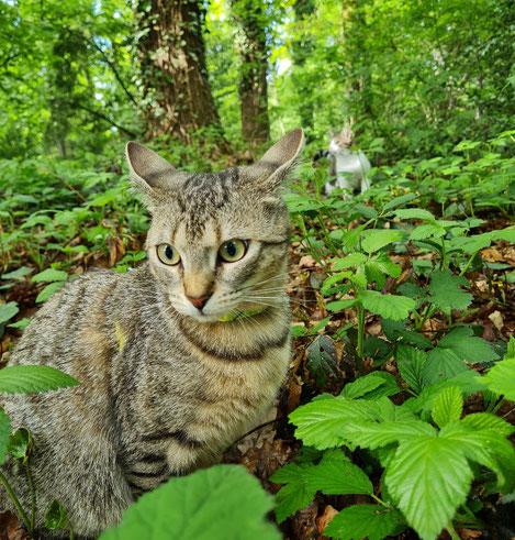 Auch Fibi fühlt sich im Wald sehr wohl. Inzwischen ist sie hier ohne Geschirr und Leine unterwegs