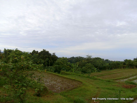 Land for sale North Bali by owner direct.