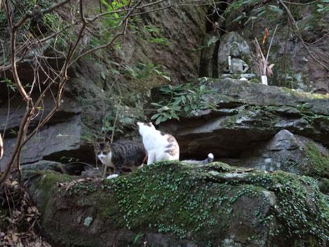 虚空蔵菩薩像のところでは2匹の兄弟猫が遊びにきました