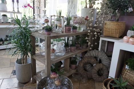 Unser Laden - Schnittblumen - Pflanzen - Keramik - Accessoires- Sträuße