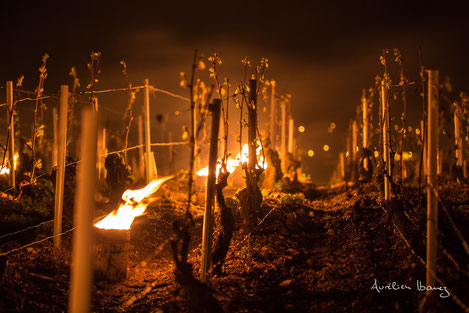 anti-frost-candles-bougies-vineyard-protection