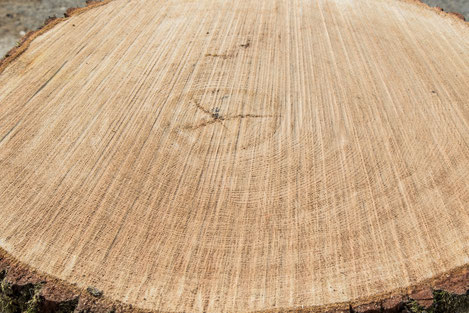oak-tree-stave-mill-merrain-camille-gauthier