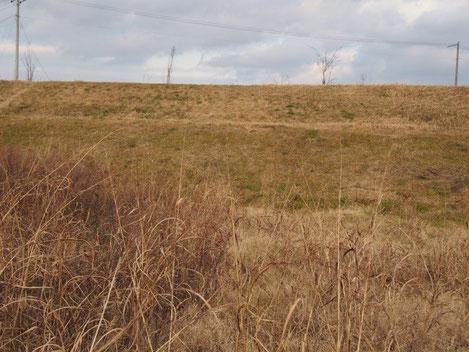 2013年12月30日。土手のチガヤ群落は草刈ずみ
