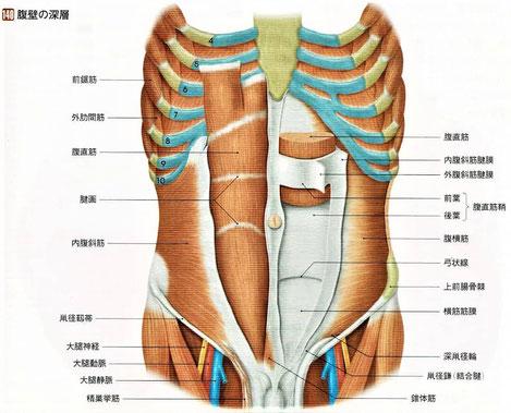 腹壁の深層
