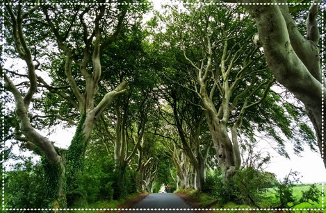 Dark hedges - Northern Ireland - Dante Harker