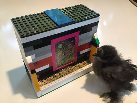 Lego Brick Bird Feeder with fuzzy Silkie chick.