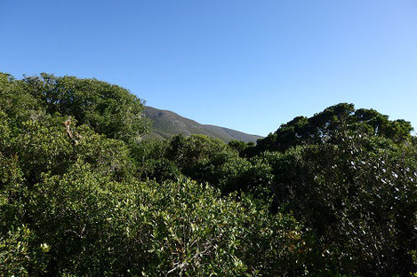 南アフリカ太古の森プラットボスで、高見台からの景色