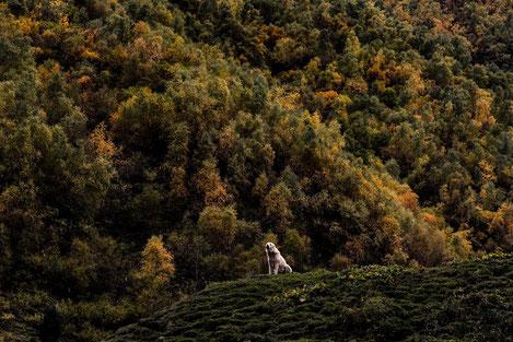 Поразительная Грузия в объективе голландского фотографа