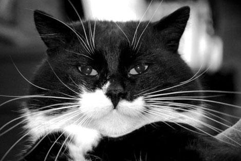 Кот, поющий грузинские песни, покорил Интернет