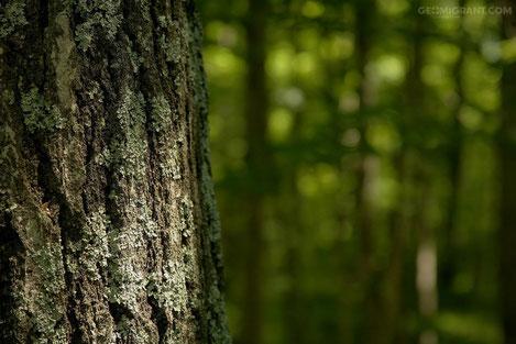 Начинается проект беспрецедентного масштаба по спасению лесов в Грузии