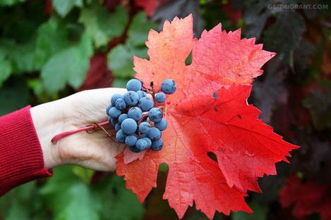 «Саперави» признан лучшим вином восточной Европы