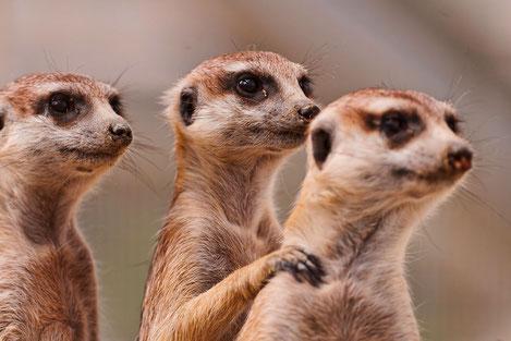 Европа подарила зоопарку Тбилиси 22 новых животных