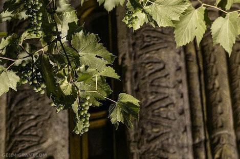 Вино: история происхождения