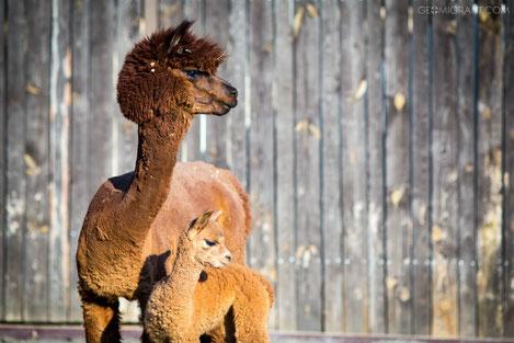 Рига подарила животных пострадавшему от наводнения зоопарку Тбилиси